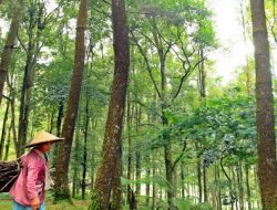 Untuk Merawat Hutan RI, Diperlukan Ilmuwan Kehutanan