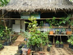 Dua Program Dinas Pertanian Pangandaran, Jamkmluhdes dan Simluhtan di Galakan.