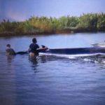 Seekor Ikan Paus Terdampar di Ujungmanik Kawunganten Cilacap