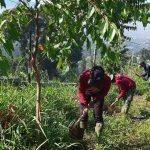 Perawatan Pohon Rutin di Lakukan Tim Satgas Citarum Harum Sektor 22 Sub 17 di Kawasan Bandung Utara