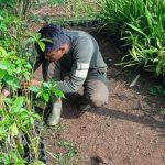 Sektor 22 Citarum Harum Sub 15, Intensifkan Pemeliharaan Bibit Pohon