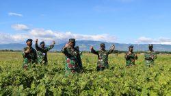 Lanud Sultan Iskandar Muda Laksanakan Panen Kacang Hijau