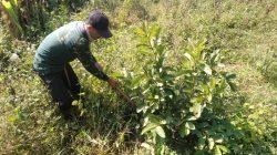 Dansub 17 Sektor 22 Citarum Harum, Ajak Komponen Masyarakat Merawat dan Memelihara Pohon