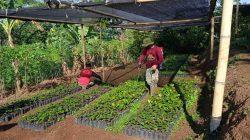 Sektor 22 Citarum Harum Sub 15, Lakukan Perawatan Bibit Pohon Agar Tumbuh Subur