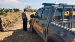 Patroli Di Lahan HGU Milik PT. Rajawali II Anggota Polsek Cikedung Desa Jatisura