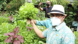 Wakil Wali Kota Tangsel Hadiri Panen Sayur Mayur Hasil Urban Farming